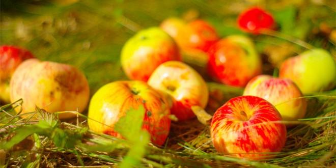 как празднуют яблочный спас в 2016 году