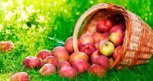 сценарий праздника яблочный сапс