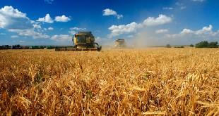день работников сельского хозяйства в беларуси