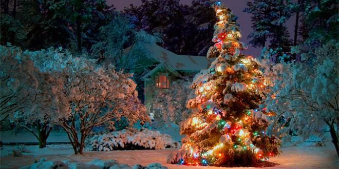 мартин лютер и идея украшать рождественскую ель