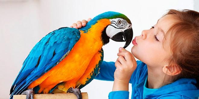 сценарий праздника день птиц в детском саду