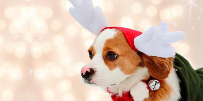 в чём встретить новый год собаки