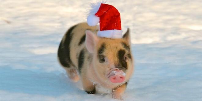 корпоратив 2019 год свиньи