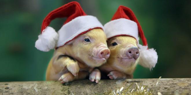 год свиньи для детей