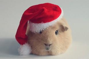сценка поздравление с годом крысы