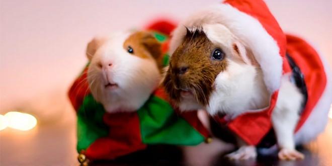 новогодние смс поздравления с годом крысы